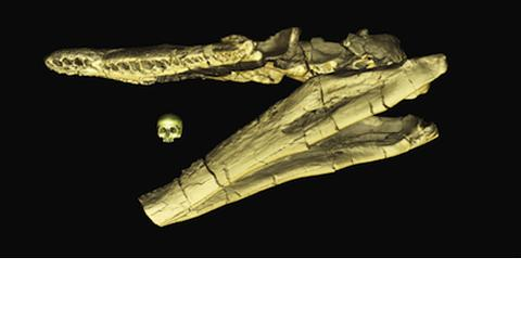 Image of Jaw Skull